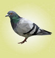 low poly pigeon bird on background vector image
