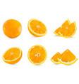 set realistic whole orange and half orange vector image vector image