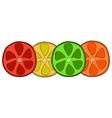 Bright citrus slices vector image vector image