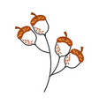 oak branch with acorns natural foliage vector image