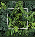 tropical background with palm leaves white frame vector image vector image