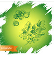 background sketch the herbs and spice vector image vector image