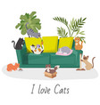 cute cats home pets cartoon vector image