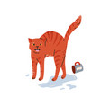 tabred cat say meow turned cup over water vector image vector image