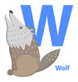 blue letter w sitting and howling wolf abc cards vector image