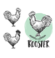 Rooster logotypes set Vintage produce elements vector image vector image