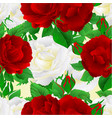 seamless texture two white and red roses festive vector image vector image
