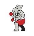 Elephant Boxer Boxing Stance vector image vector image