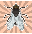 Insect anatomy Sticker fly Musca domestica vector image vector image