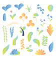 modern plants elements collection vector image