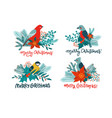 titmous and red cardinal on holly branch eating vector image