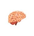 human brain internal organ anatomy vector image