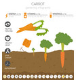 carrot beneficial features graphic template vector image
