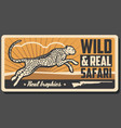 safari hunting cheetah animal vector image vector image