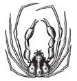 scorpion spider crab vintage vector image vector image