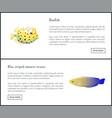 blue striped tamarin and boxfish aquatic habitants vector image vector image