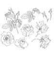 hand drawn botanical vector image vector image
