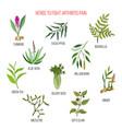 herbs to fight arthritis pain turmeric eucalyptus vector image vector image
