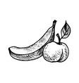 ink drawing banana and peach vector image vector image
