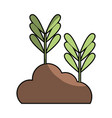 natural plants with leaves and botanic ground vector image