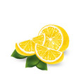 realistic lemon on a white background vector image