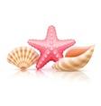 set summer sea shells and vector image