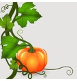 pumpkins background vector image