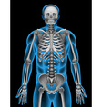 A mans skeleton system vector image vector image
