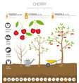 cherry beneficial features graphic template vector image