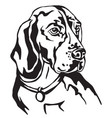decorative portrait of beagle vector image