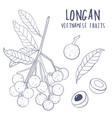 longan set hand drawn tropical vietnamese vector image vector image