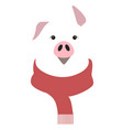year pig vector image