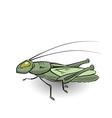 green grasshopper vector image