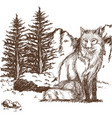 wolf wildlife animal image is hand drawn pencil vector image vector image