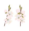 Sakura on the white background vector image