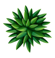 A topview of a green landscaping plant vector image vector image