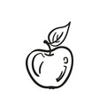 apple doodle simple drawing isolated hand drawn vector image