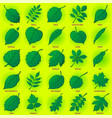 leaves of plants set vector image vector image