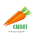 carrot vegetable vector image
