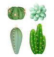 cactuses plants decorative realistic succulent vector image