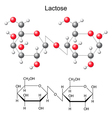 Chemical formula and model of lactose molecule vector image vector image