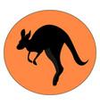 kangaroo jumping on white background vector image vector image