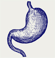 Human stomach vector image vector image