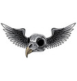 monochromatic bird skull with wings for tattoo vector image vector image