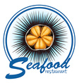 Sea urchin food label on white vector image