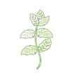 silhouette peppermint plant ingredient to vector image vector image