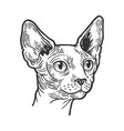 sphynx cat animal head sketch engraving vector image vector image