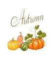 Autumn background with pumpkins Decorative vector image vector image