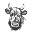 cow - domestic animal farm hand drawn vector image vector image