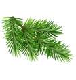 Green fluffy pine branch Isolated on white vector image vector image